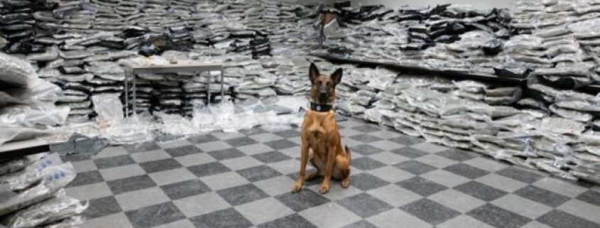 Chicago K-9 sniffs out $10 million in narcotics