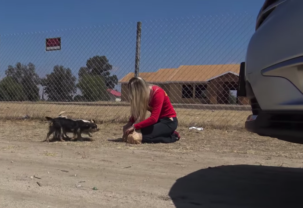 Dog Family Dumped In The Desert To Fend For Themselves Stumbles Upon A Helping Hand