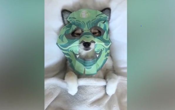 Pooch relaxes with own beauty mask
