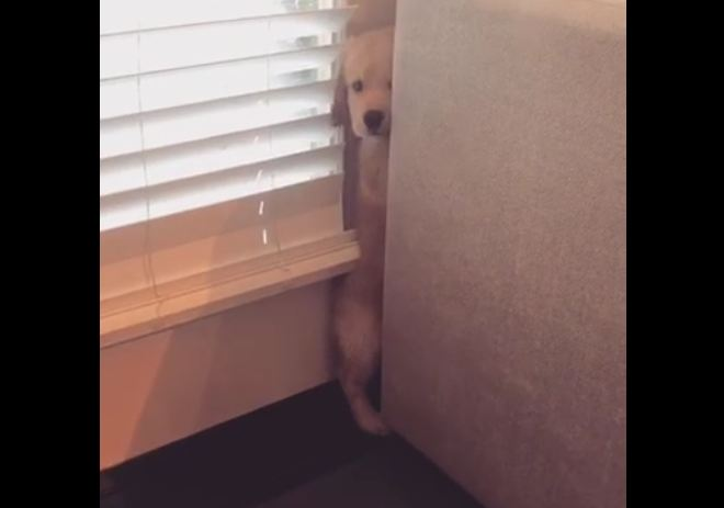 This terrified puppy doesn't understand the vacuum yet!