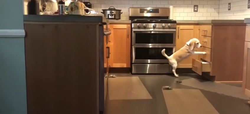 Mission Impossible: this dog could be a spy