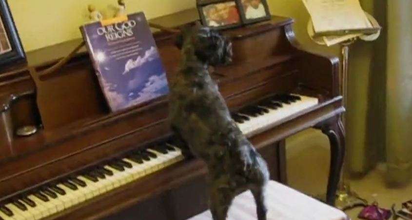 Dogs Play The Piano And Sing