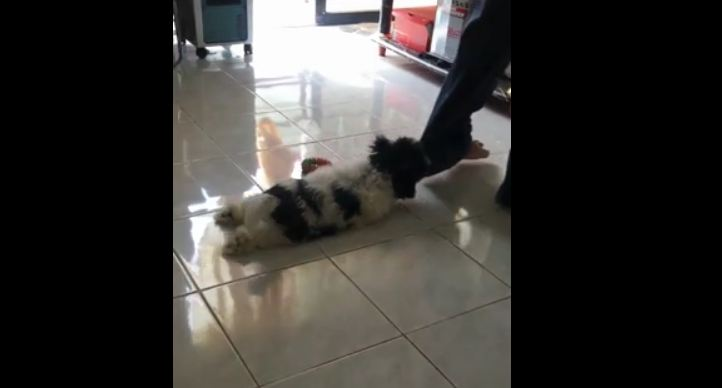 Doggy Refuses to Let Owner Leave