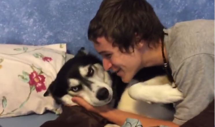 Siberian husky doesn't want a kiss