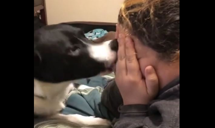 Dog frantically tries to stop owner from crying