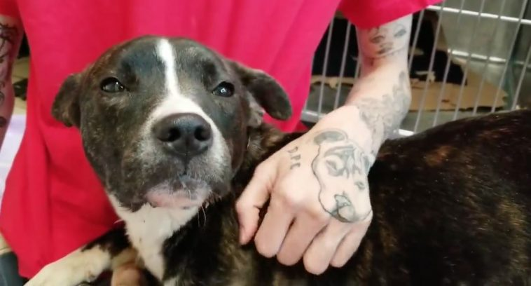 Sweet Dog Found On Detroit Streets Missing Her Tongue Looking For Loving Home