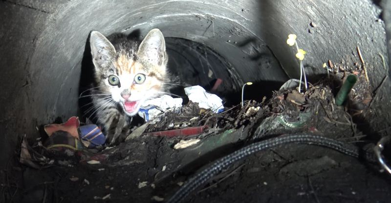 Hope For Paws Finds Kitten In A Sewer And Introduces Her To A Puppy Friend