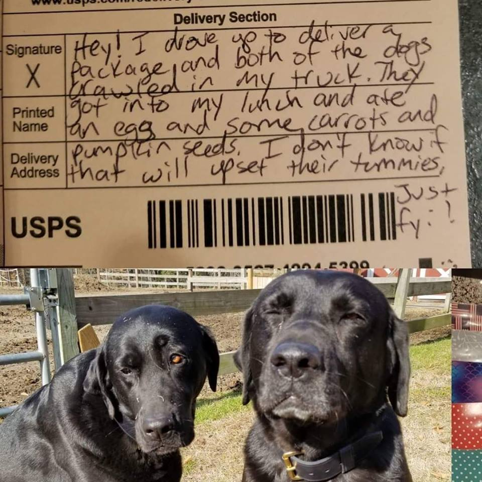 Postal Worker Leaves Note After Dogs Break Into Mail Truck And Steal Her Lunch