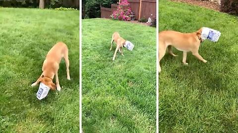 Clumsy dog gets head stuck in popcorn bag