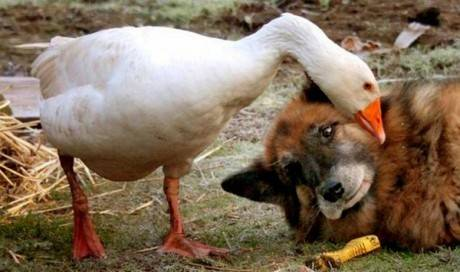 Acts Of Kindness In The Animal Kingdom That Prove Animals Are The Best