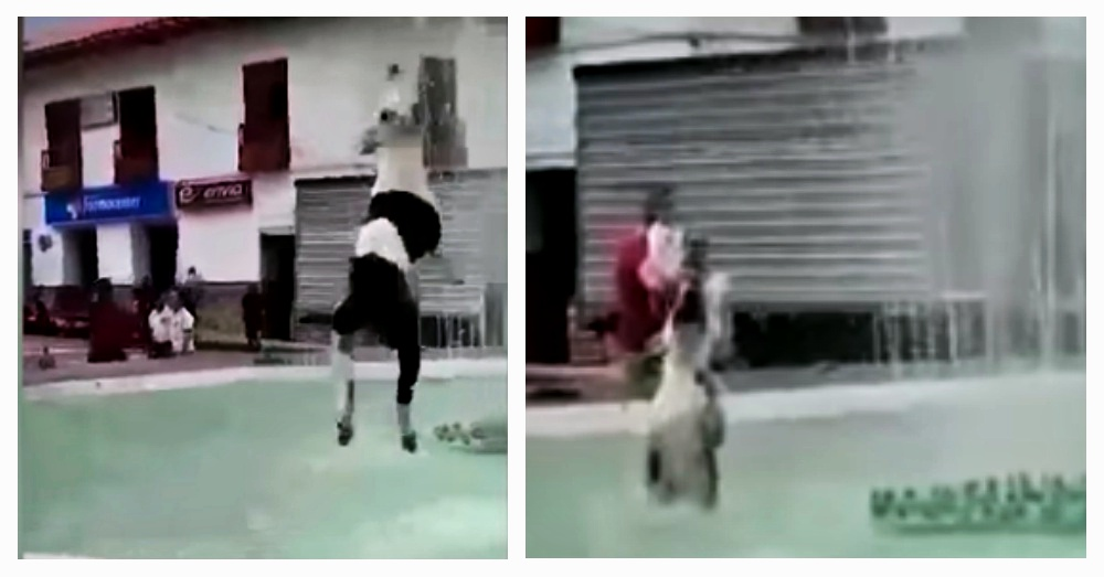 Dog Leaps Into Fountain To Try To Catch The Water And His Antics Are Making Everyone Smile