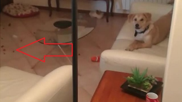 Guilty dog caught red-handed making giant mess