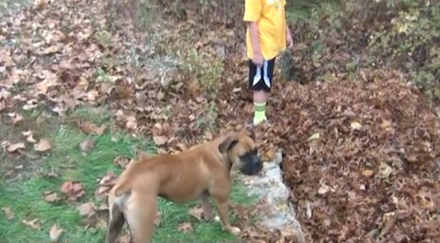 Watch How This Adorable Bulldog Reacts When His Favorite Buddy Suddenly Disappears