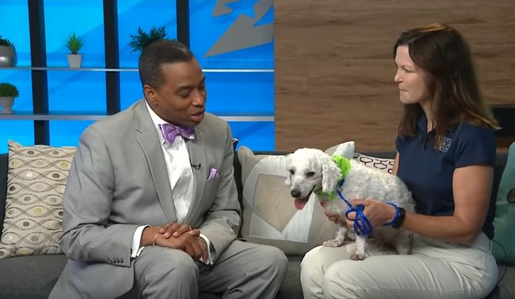 Little Dog Interrupts Weather Forecast, Makes For Some Great TV