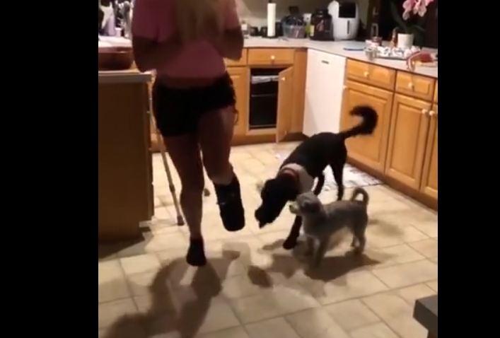 Sympathetic Dogs Hop Alongside Their Injured Owner