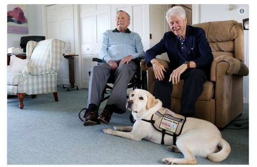 Former President HW Bush Adopts Adorable New Service Dog 'Sully'