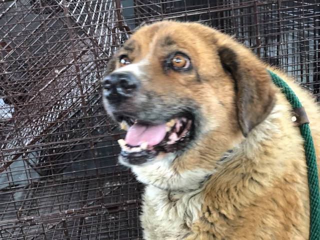 Senior Dog Dumped On Streets Can Hardly Walk But That Doesn't Stop Him From Smiling