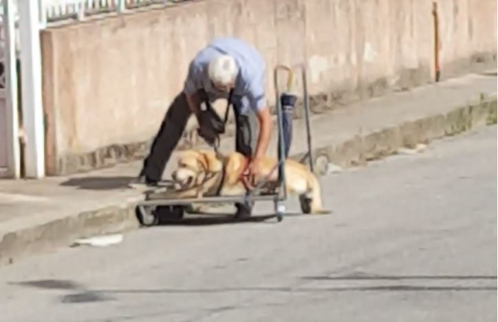 Man Seen Catering To His Disabled Dog Is The Definition Of Love