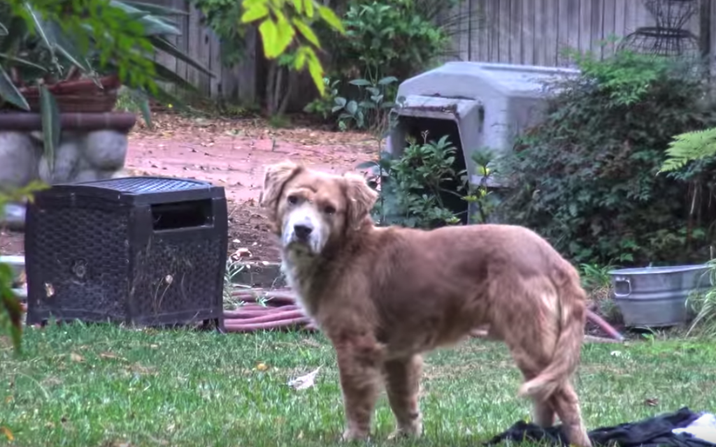 Two Abandoned Dogs Found A Home Nearby, But Their Scared Friend Was Left Behind
