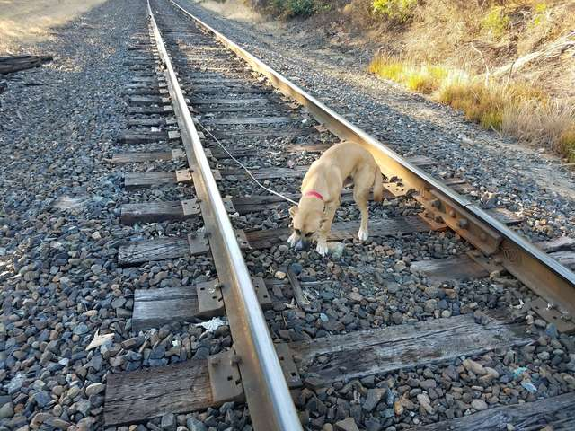 Man Sees A Figure On The Railroad Tracks And Realizes It's A Tied-Up Dog