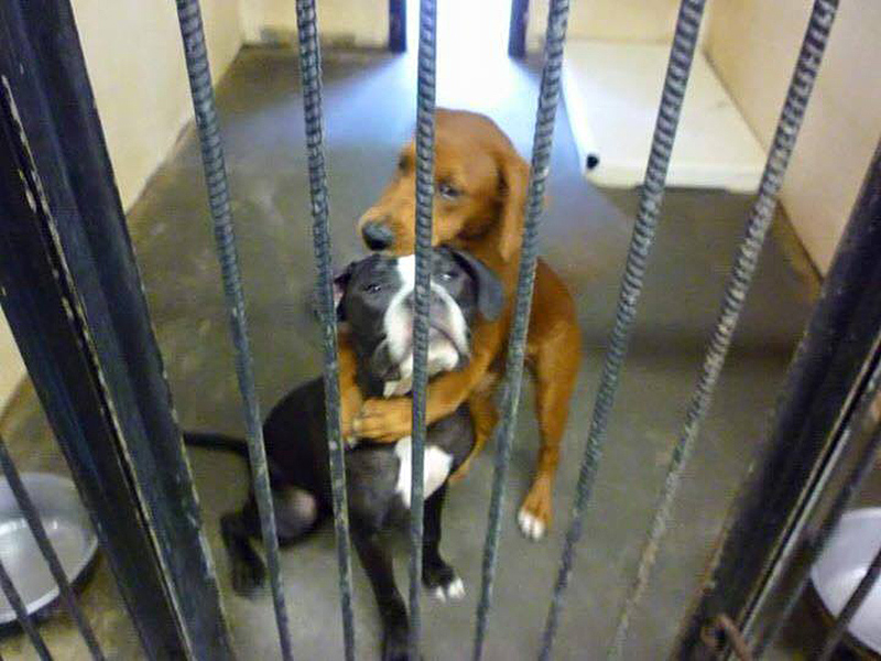 Shelter Dog Hugs Her Puppy Friend—And It Ends Up Saving Their Lives