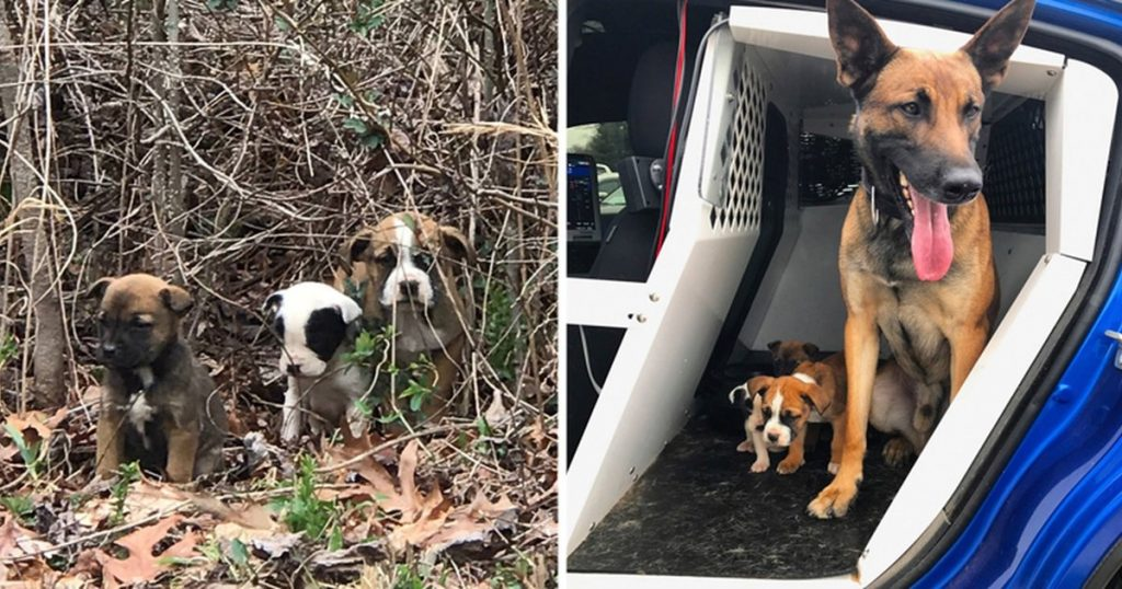 K9 Proud To Help Rescue Three Puppies Abandoned In A Bush