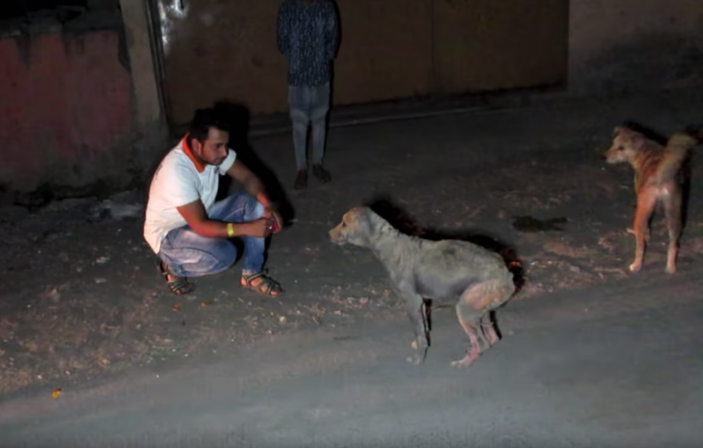 Stray Dog With No Fur Was In Too Much Pain To Let Anyone Touch Him
