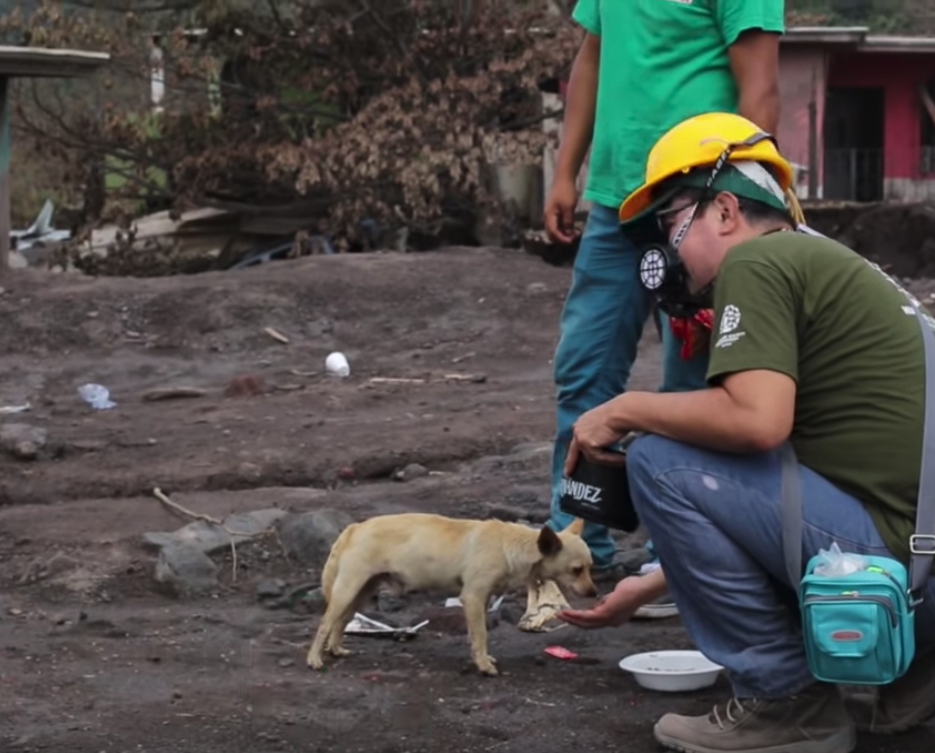 Humane Society Responds In Wake Of Volcanic Eruption To Save Over 900 Animals