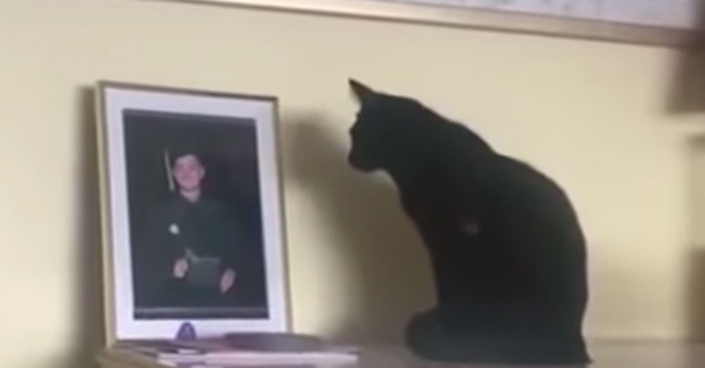 Black Cat Won't Stop Looking At Picture Of Navy Son Until Mom Pieced Together The Heartwarming Truth