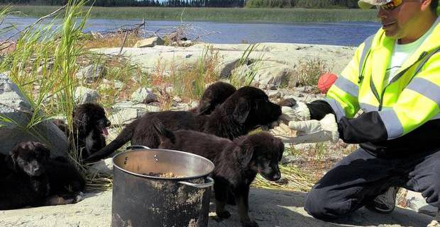 Seven adorable puppies rescued from Canadian uninhabited island