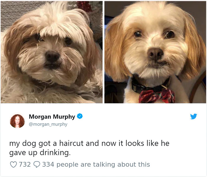 Funny Dog Tweets Every Dog Owner Should See ASAP