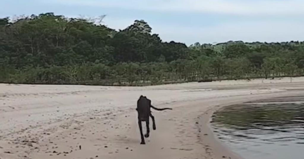 Cruise Docks At Deserted Island, And Man Sees Skeletal Dog Running Toward Him