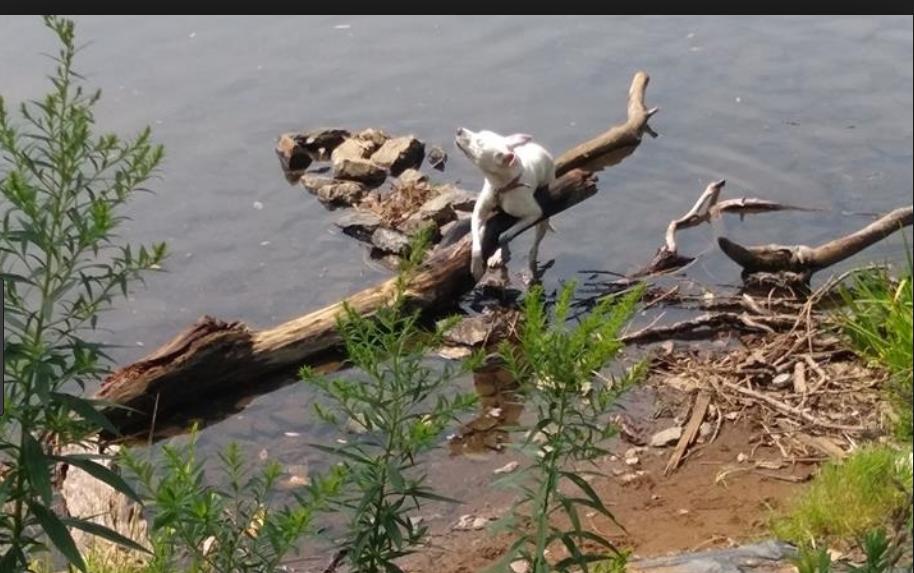 Husky found tied to log near Erie Canal