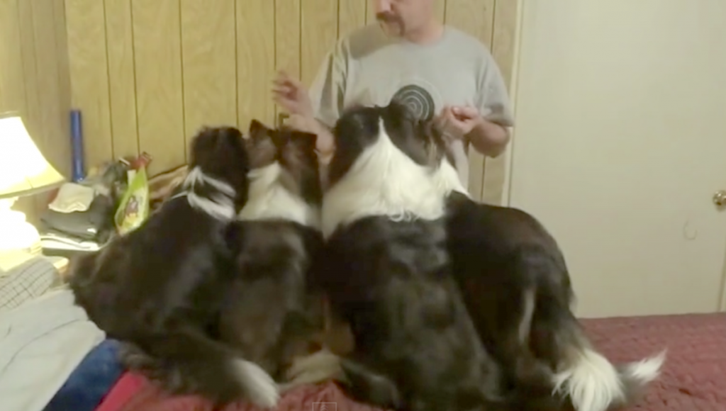 Clever Dog On The Left Outsmarts Dad For More Treats