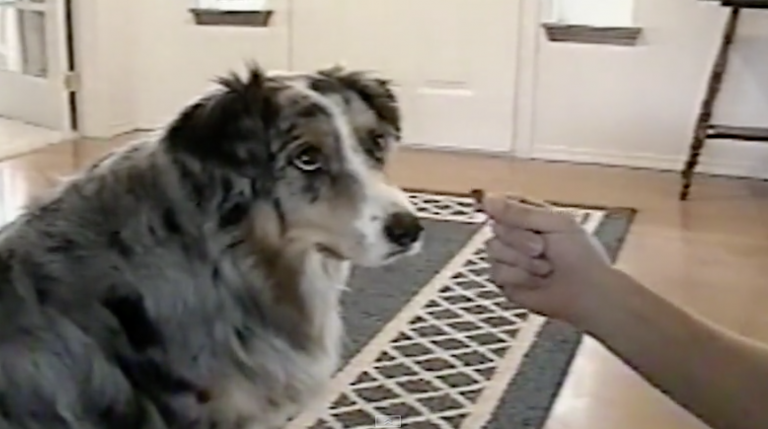 Smart Collie Won't Accept Treats From The 'Dog Catcher'