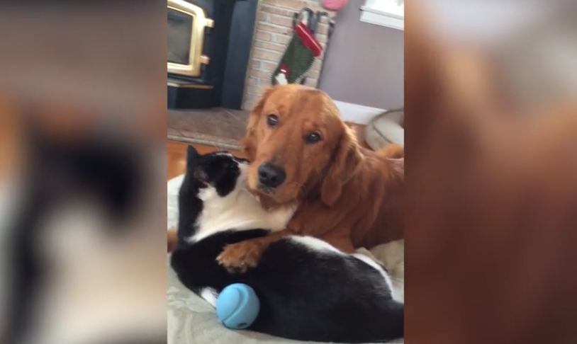 Unlikely Animal Friendship Will Set Your Relationship Goals