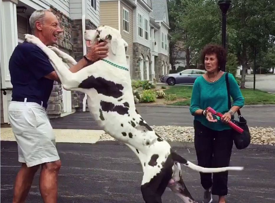Giant Great Dane Gives Grandpa the Best Hugs