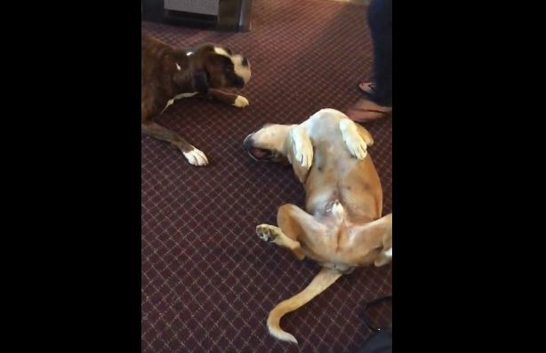 Pooch Plays Dead, But His Best Buddy Is Freaking Out