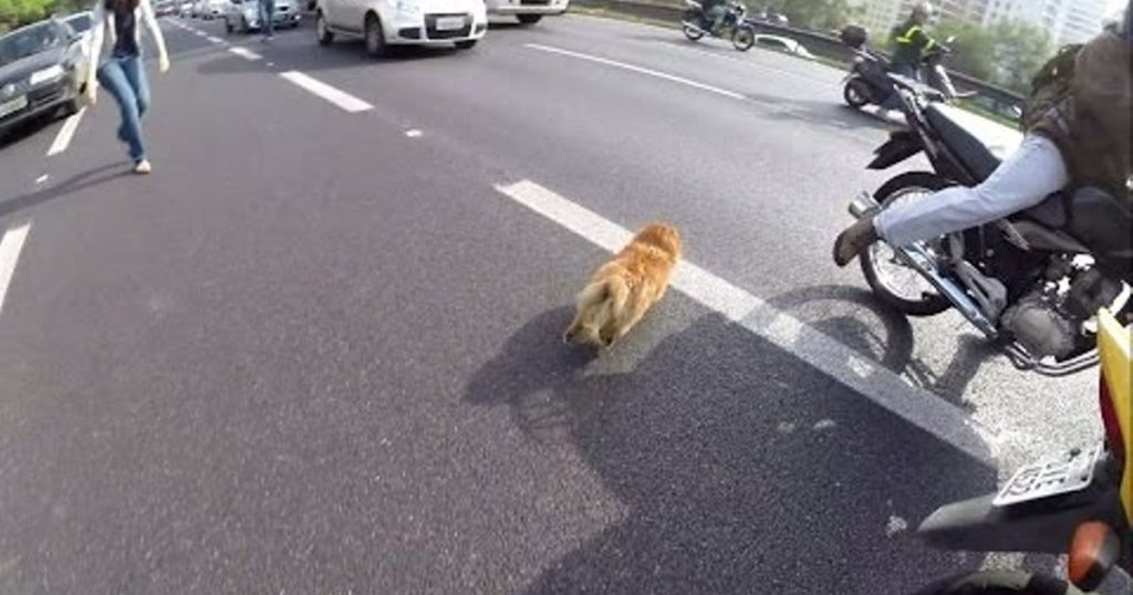 Group of Bikers See Dog Running Down Busy Highway And Spring Into Action