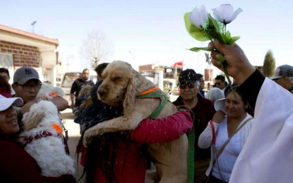 Dog Day in Bolivia! Church celebrates the patron saint of puppers.