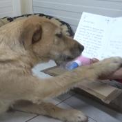 Sad Shelter Dog Receives Sweet Letter From Adoptive Mom