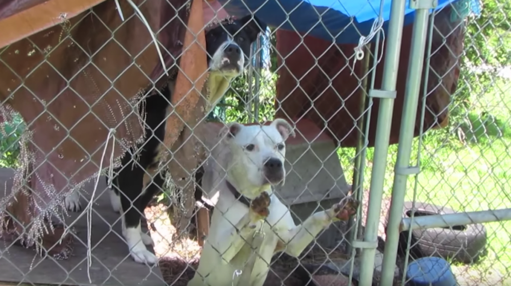 Sweet Dog Rescued From Neglect And Tragedy Now Has A Reason To Smile