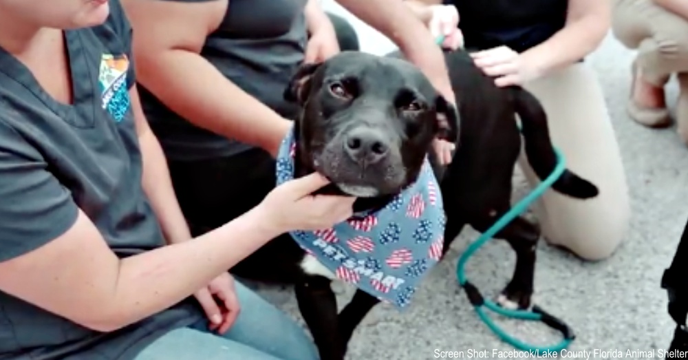 A Beautiful Mutt Had Been Passed By For 410 Days At Shelter