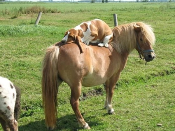15 Pictures That Prove Horses And Dogs Make The Best Of Friends