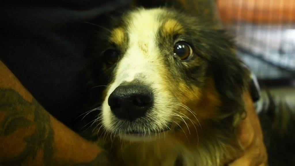 Dog Rescued From Cruelty Was So Quiet But His Eyes Spoke Volumes