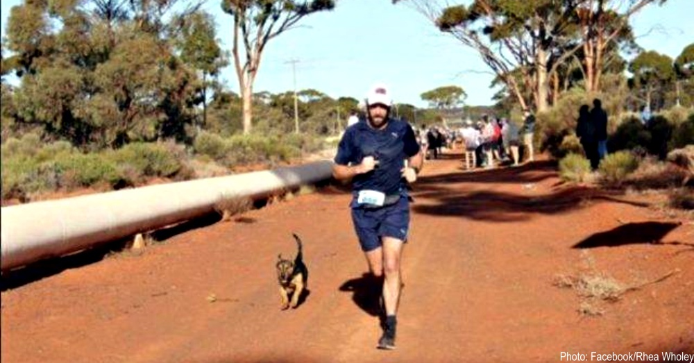 Stray Dog Joins And Finishes Half-Marathon In Australia