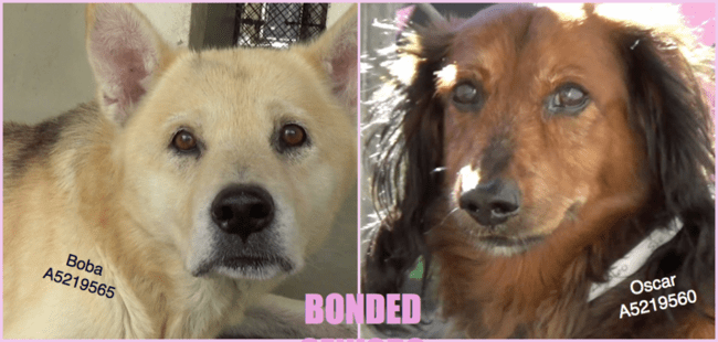 Bonded pair deserted at 14-years-old in desperate need of help