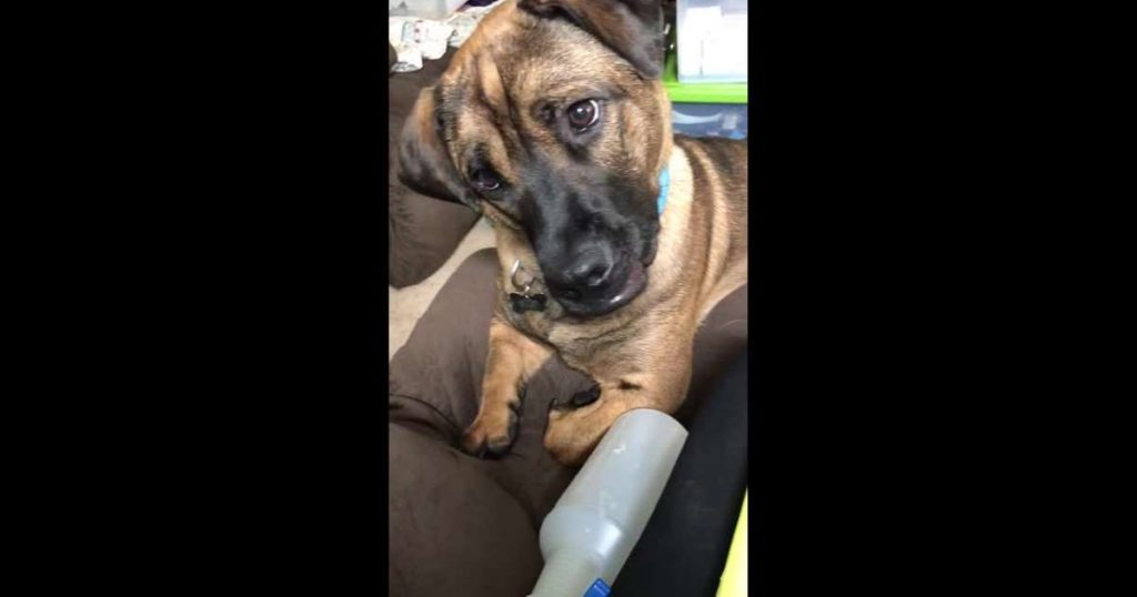 Confused dog tilts head adorably as he hears whistling sound
