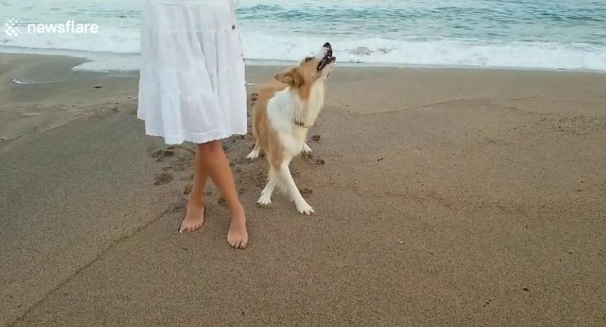 Woman Dances On The Beach with Her Beautiful Dog