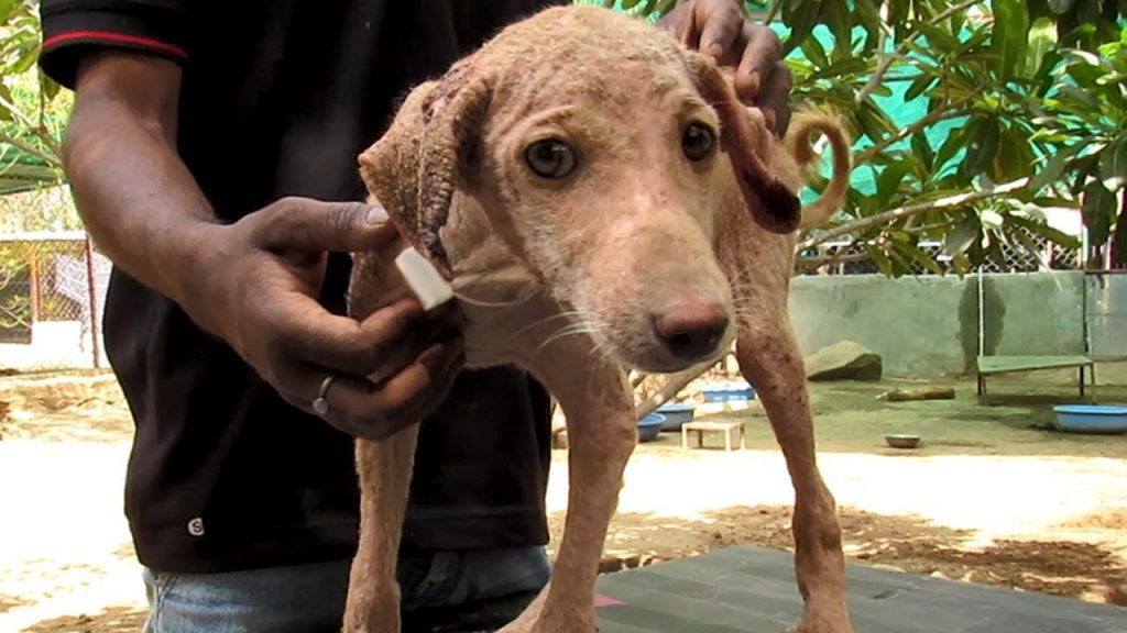 Sweetest Puppy Stricken with Mange is Ray of Sunshine After Healing